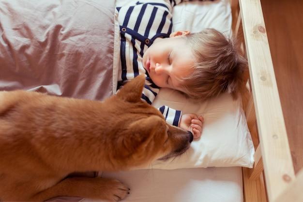 Garotinho fofo dormindo com o cachorro shiba inu engraçado nad amigável na cama em casa