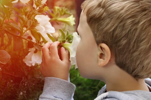 Garotinho segurar flores de verão e cheirá-las. criança loira bonita. fotografia em close-up.