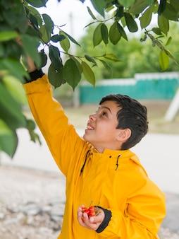 Garoto bonito em capa de chuva, colheita de cerejas
