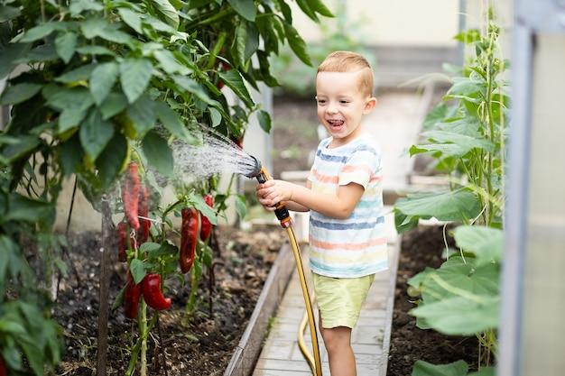 Garoto cuida das plantas, rega mudas em uma estufa