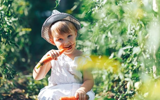Garoto pequeno agricultor menino sentado na linha de plantas de tomate, vestindo macacão casual branco terno e chapéu cinza, comendo cenoura, tempo de colheita