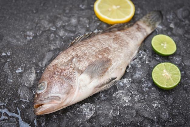 Garoupa no gelo com alecrim e limão, frutos do mar crus frescos para alimentos cozidos
