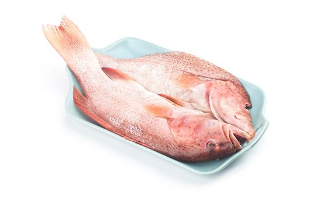 Garoupa será cozida no vaporï ¼œ peixe garoupa isolado no fundo branco
