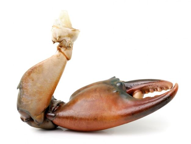 Garra de caranguejo isolada isolada