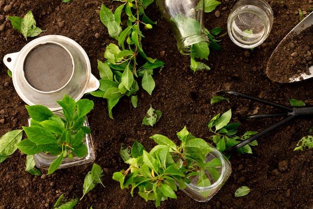 Garrafas de vidro e potes de água, mudas verdes ou galhos com pequeno ancinho e pá no fundo do solo. conceito de jardinagem e cuidados com as plantas