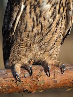 Garras de uma coruja em close-up na natureza