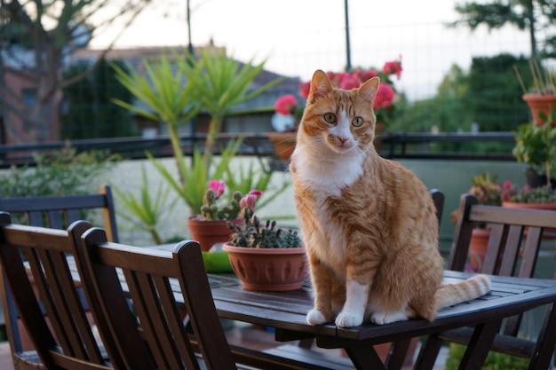 Gata linda no terraço