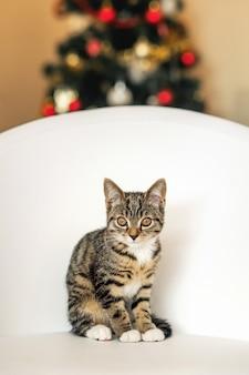 Gatinho bonitinho sentado em uma cadeira de couro branco