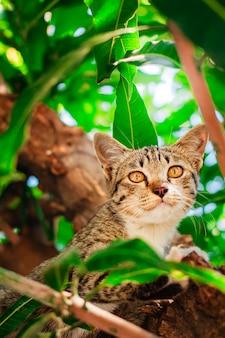 Gatinho bonito do gato malhado que relaxa sobre a árvore.