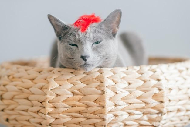 Gatinho bonito engraçado da criação de animais que encontra-se na cama do `s do gato em casa na parede cinzenta.