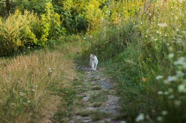 Gatinho branco andando pela estrada rural entre grama verde e flores silvestres