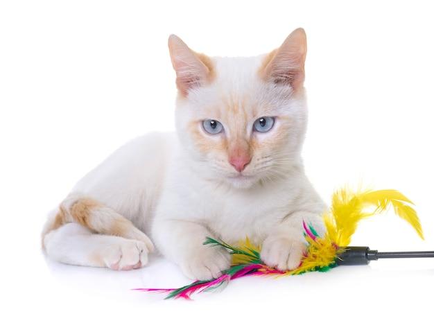 Gatinho branco em estúdio
