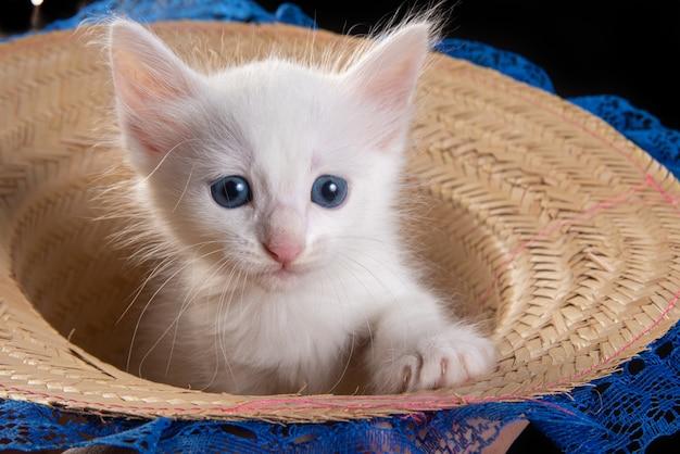 Gatinho branco, gatinho branco brincando dentro de um chapéu de palha com laço sobre uma mesa de madeira.