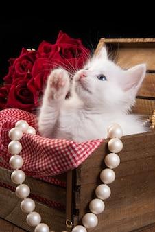 Gatinho branco, gatinho branco brincando dentro de uma caixa de madeira com um tecido xadrez vermelho sobre uma mesa de madeira e colares de pérolas.