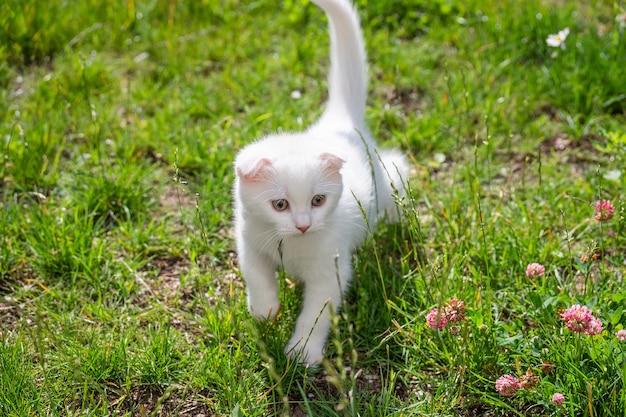 Gatinho branco na grama