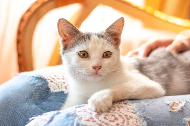 Gatinho branco nos braços de uma menina