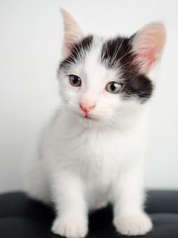 Gatinho branco sentado em uma mesa