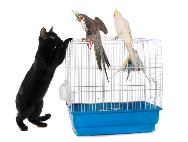 Gatinho brincando com pássaro