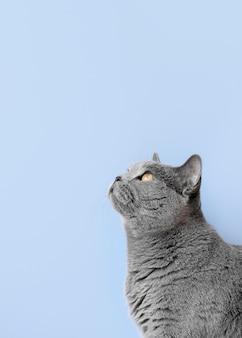 Gatinho cinza com parede monocromática atrás dela