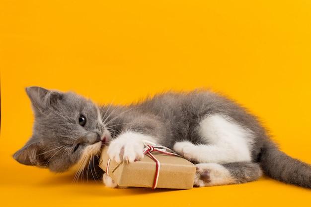Gatinho cinzento bonito jogando engraçado e divertido com uma caixa de presente de natal em um amarelo.
