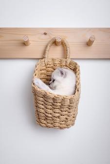Gatinho cinzento dentro da cesta no cabide