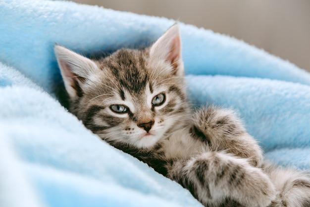Gatinho cinzento malhado deitado de costas. animal gato cabrito com cara de cara interessada olha para a câmera