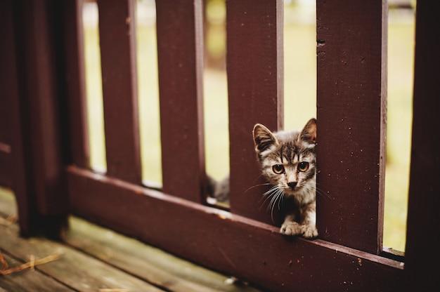Gatinho cinzento pequeno que joga na jarda