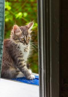 Gatinho cinzento pequeno que senta-se na janela