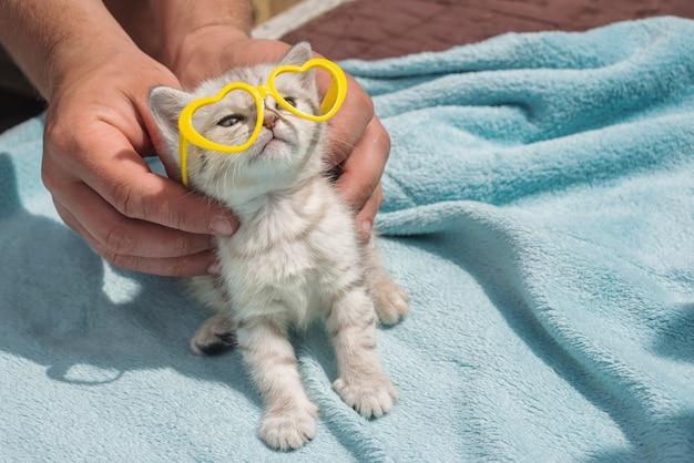 Gatinho cinzento sobre um fundo azul com óculos amarelos.