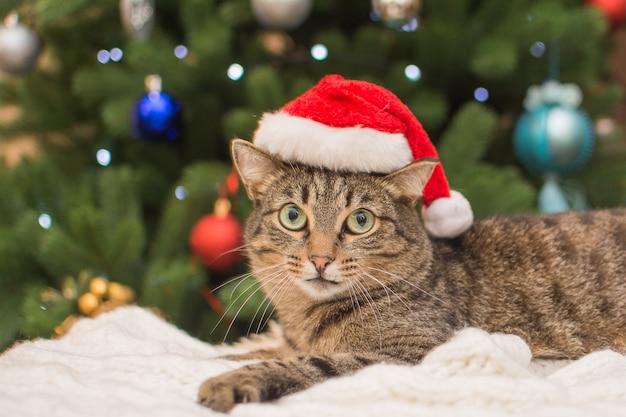 Gatinho com um chapéu de papai noel debaixo de uma árvore de natal.