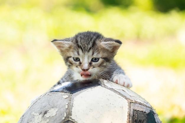 Gatinho com uma bola de futebol