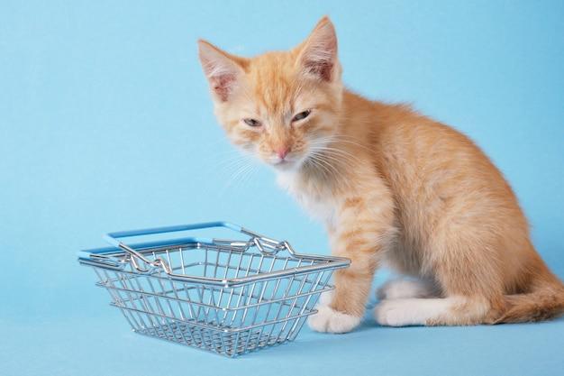 Gatinho com uma cesta de compras sobre fundo azul. fazer compras para animais. espaço para cópia do conceito de loja de animais