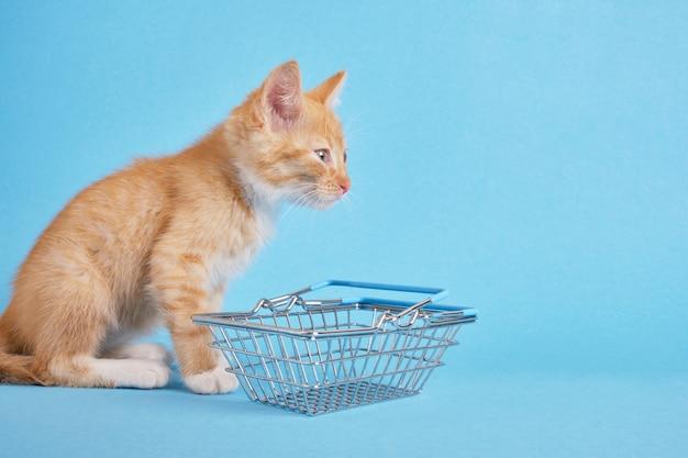 Gatinho com uma cesta de compras sobre fundo azul. fazer compras para animais. loja de animais