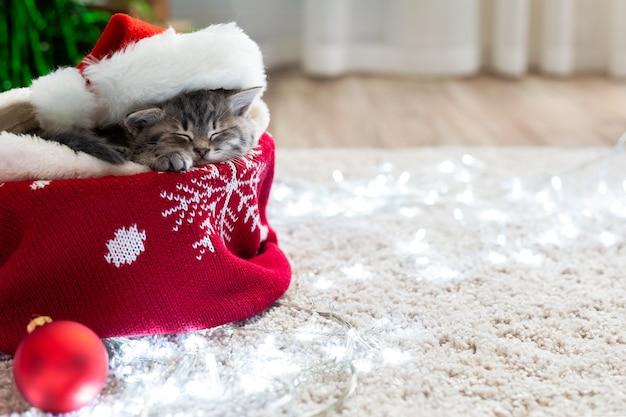 Gatinho de natal com chapéu de papai noel dormindo em casa no tapete com luzes.
