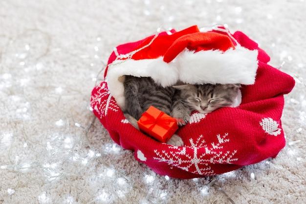 Gatinho de natal com chapéu de papai noel dormindo em casa.