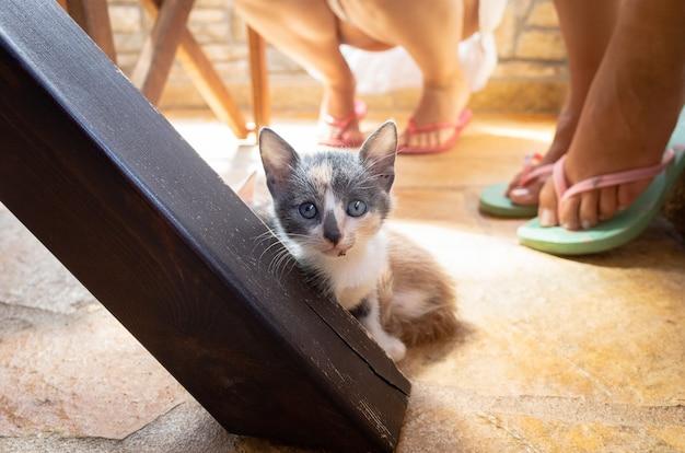 Gatinho debaixo da mesa da cozinha olhando diretamente para a câmera