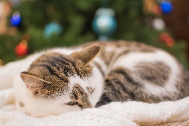 Gatinho dorme debaixo da árvore de natal.