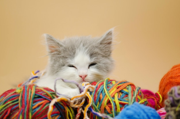 Gatinho dormindo com bolas de fio de lã colorida