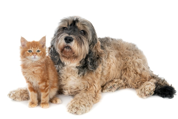 Gatinho e cachorro juntos