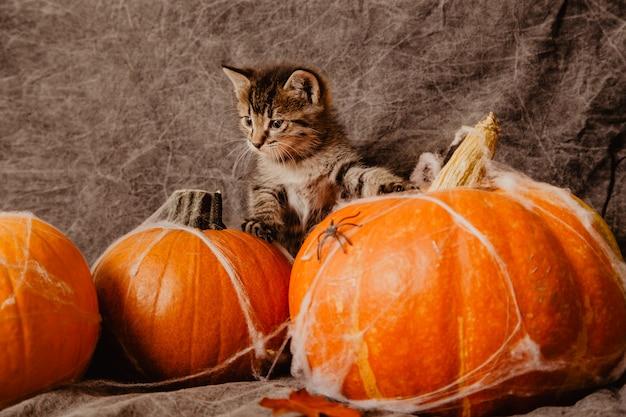 Gatinho em decorações de halloween