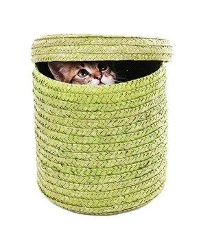 Gatinho em uma cesta de vime isolado no branco