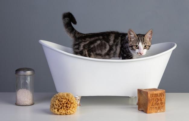 Gatinho em uma velha banheira branca com sabão