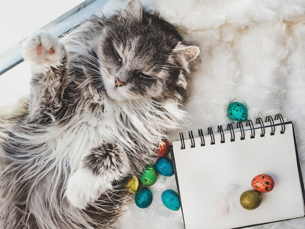 Gatinho encantador, caderno com uma página em branco e ovos de páscoa