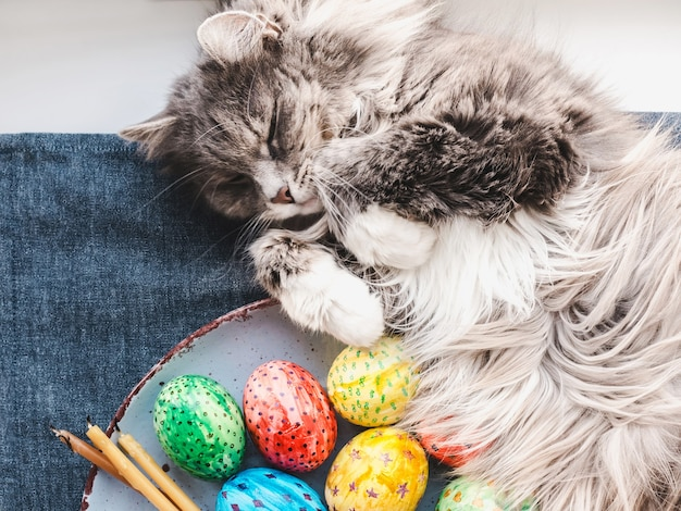 Gatinho encantador e ovos de páscoa pintados em cores brilhantes sobre um fundo branco. vista superior, close-up. feliz páscoa. preparando-se para o feriado