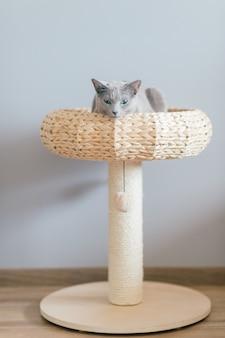 Gatinho encantador que encontra-se na cama do `s do gato em casa na parede cinzenta.