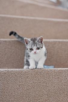 Gatinho engraçado cinza e branco sentado na escada macia de uma casa aconchegante Foto Premium