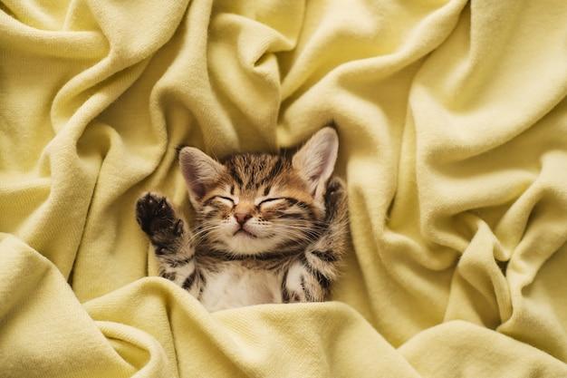 Gatinho fechado em toalha quente branco sonolento pequeno