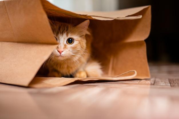 Gatinho fofinho sentado dentro do saco de papel marrom