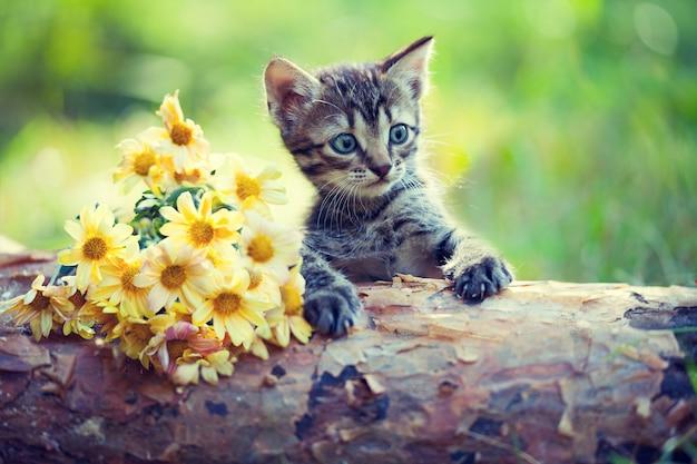 Gatinho fofo ao ar livre olhando flores em um pedaço de madeira