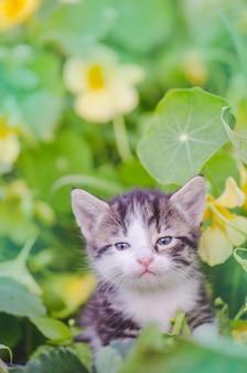 Gatinho fofo brincando no jardim
